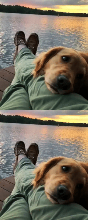 Dog's favorite view (via): Dog's favorite view (via)