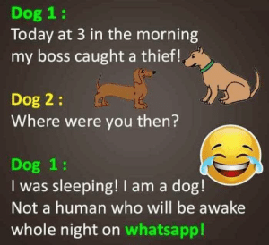 My moms WhatsApp feed= free karma: Dog 1:  Today at 3 in the morning  my boss caught a thief!  Dog 2:  Where were you then?  Dog 1:  I was sleeping! I am a dog!  Not a human who will be awake  whole night on whatsapp! My moms WhatsApp feed= free karma