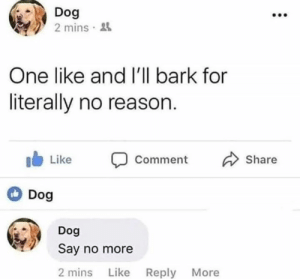 Say No More, Reason, and Dog: Dog  2 mins  One like and I'll bark for  literally no reason.  I Like Comment  Dog  Share  Dog  Say no more  2 mins Like Reply More
