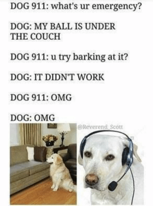 Cute, Dogs, and Omg: DOG 911: what's ur emergency?  DOG: MY BALL IS UNDER  THE COUCH  DOG 911: u try barking at it?  DOG: IT DIDNT WORK  DOG 911: OMG  DOG: OMG  @Reverend Scott Check out our puppy gallery for more incredibly adorable dogs and puppies! #puppies #puppy #dogs #dog #pupper #doggo #cute