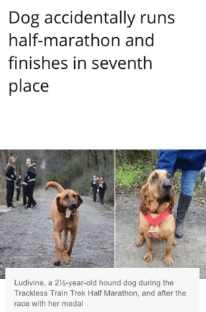 Roses are red, Mars is in outer space: Dog accidentally runs  half-marathon and  finishes in seventh  place  Ludivine, a 2%-year-old hound dog during the  Trackless Train Trek Half Marathon, and after the  race with her medal Roses are red, Mars is in outer space