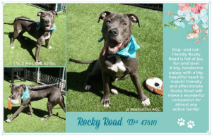 Dog And Cat Friendly Rocky Road Is Full Of Joy Fun And Love A Big Handsome Puppy With A Big