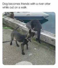 Just a couple of neighbors saying hello as they pass by | @cuteandfuzzybunch: Dog becomes friends with a river otter  while out on a walk Just a couple of neighbors saying hello as they pass by | @cuteandfuzzybunch