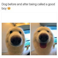 Dogs, Memes, and 🤖: Dog before and after being called a good  boy Her: who's a good boy Doggo: Susan, bitch, not now