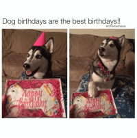 "Be Like, Bless Up, and Dieting: Dog birthdays are the best birthdays!! Shout to u girls walking around the city in them slim fit Moncler and Canada Goose down coats I see y'all. Lil fine asses y'all think y'all slick. Y'all ain't slick at all. Smash got quadruple x ray vision. U could be wearing that coat over a sweater over another shirt over a bra and imma still be able to ascertain with only a quick glance whether or not I want u to bear my chirren. Them hats with the fur lining with the flappy ears? Them big Burberry scarves with the overcheck? None of that is slick. Smash got a radar for this shit. Y'all gotta remember - I do deals in the Middle East. I travel to a part of the world where I gotta sometimes make a snap judgment based on half an ankle and a half-revealed eyebrow whether a girl gorgeous or not. Y'all. Ain't. Slick. I swear I could judge a beauty contest where the girls wear burqas and I'd be like ""Duanphen from Thailand bring your fine ass here u win the beauty contest I could tell by your strut that u fine AF"" and then the burqas come off and bam, Smash was right, Ms. Thailand was indeed the winner. Nah but u know what fuck beauty contests. Beauty is more than that. It's not just physical. It's how a woman carry herself. It's how she talk. It's her intellect. It's her independence. It's whether if we're in a argument, she should ice cold slap me across the cheek - hard - and be like ""I told you not to push my button"" and I'm like ""cot damn this woman assault and batteried me ok I deserved it but wow - she crazy, and high-key scary - I like it."" How did I get on this tangent? All I'm saying is, regardless how thick your coat is, I see u. That holiday winter weight on your ass and hips looking right. Forget that new year resolution and lemme bury my face in it before u crash diet and start doing three spin classes per day for 'bikini weather'. Let smash enjoy it before it melts away. U dig! Bless up 😍😂😂😂"