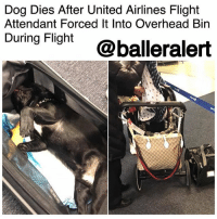 "Facebook, Family, and Memes: Dog Dies After United Airlines Flight  Attendant Forced It Into Overhead Bin  During Fight @balleralert Dog Dies After United Airlines Flight Attendant Forced It Into Overhead Bin During Flight - blogged by @msJennyb ⠀⠀⠀⠀⠀⠀⠀⠀⠀ ⠀⠀⠀⠀⠀⠀⠀⠀⠀ Tragedy struck on Monday after a United Airlines flight attendant forced a dog into an overhead bin during a flight from Houston to New York's LaGuardia Airport. ⠀⠀⠀⠀⠀⠀⠀⠀⠀ ⠀⠀⠀⠀⠀⠀⠀⠀⠀ According to the New York Post, a passenger on the flight brought the incident to light after the dog died. ⠀⠀⠀⠀⠀⠀⠀⠀⠀ ⠀⠀⠀⠀⠀⠀⠀⠀⠀ ""I want to help this woman and her daughter. They lost their dog because of an @united flight attendant,"" Maggie Gremminger wrote on Twitter with a photo of the dog's owners. ""My heart is broken."" ⠀⠀⠀⠀⠀⠀⠀⠀⠀ ⠀⠀⠀⠀⠀⠀⠀⠀⠀ Although the pup was in a TSA-approved pet carrier, the flight attendant insisted that the woman store the dog in the overhead bin for the rest of the flight. ⠀⠀⠀⠀⠀⠀⠀⠀⠀ ⠀⠀⠀⠀⠀⠀⠀⠀⠀ ""There was no sound as we landed and opened his kennel,"" another passenger wrote on Facebook. ""There was no movement as his family called his name. I held her baby as the mother attempted to resuscitate their 10-month-old puppy."" ⠀⠀⠀⠀⠀⠀⠀⠀⠀ ⠀⠀⠀⠀⠀⠀⠀⠀⠀ The airline has since addressed the incident in a statement to The Points Guy, saying, ""This was a tragic accident that should never have occurred, as pets should never be placed in the overhead bin. We assume full responsibility for this tragedy and express our deepest condolences to the family and are committed to supporting them. We are thoroughly investigating what occurred to prevent this from ever happening again."""