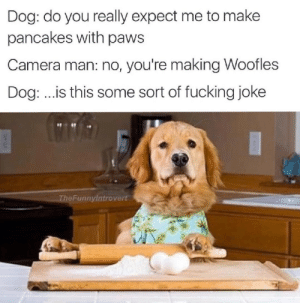 9/11, Fucking, and Meme: Dog: do you really expect me to make  pancakes with paws  Camera man: no, you're making Woofles  Dog:..is this some sort of fucking joke  9 11  TheFunnylntrovert Meme dump