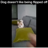 Beautiful, Crazy, and Dogs: Dog doesn't like being flipped off Love this dog Follow: @Crelube ⠀⠀⠀⠀ ⠀@Crelube ⠀⠀⠀⠀ ⠀⠀ ⠀⠀⠀⠀⠀ ⠀⠀🔛FOLLOW 🙈 @Crelube 🙈 ⠀⠀⠀⠀ ⠀⠀⠀⠀⠀⠀ALSO ⠀ 🙉 @Crelube 🙉 ⠀ ⠀⠀ ⠀ ⠀ ⠀ ⠀ ⠀ ⠀⠀⠀⠀⠀ 🙊 @Crelube🙊 ⠀⠀⠀⠀ ⠀ ⠀⠀⠀⠀ DOUBLE TAP ❤️ TAG YOUR FRIENDS ✔️ ⠀⠀⠀⠀ .. amazing life adventure people men boys girls crazy lovely time beauty beautiful speed girl food water adrenaline animal nature fitness