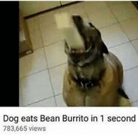 Dank Memes, Dog, and Burrito: Dog eats Bean Burrito in 1 second  783,665 views i do this everyday