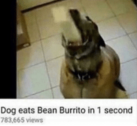 Dog, Burrito, and Bean: Dog eats Bean Burrito in 1 second  783,665 views You every night
