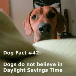 "Daylight Savings Time, Dogs, and Memes: Dog Fact #42:  Dogs do not believe in  Daylight Savings Time Don't forget to ""spring forward"" tonight!"