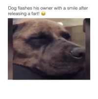 Follow @comediic for more videos✨✨ - Credit: Unknown (DM for credit): Dog flashes his owner with a smile after  releasing a fart! Follow @comediic for more videos✨✨ - Credit: Unknown (DM for credit)