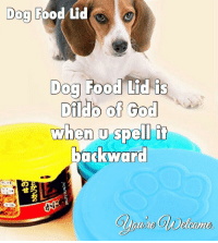 """Click, Food, and God: Dog  Food Lid  Dog  Food Lid is  Dildb of God  when u spell it  barkward  の  せろ  칡  he <p><a href=""""http://j4ckme.tumblr.com/post/171429719371/click-here-and-follow-already"""" class=""""tumblr_blog"""">j4ckme</a>:</p>  <blockquote><p><b><a href=""""http://j4ckme.tumblr.com""""> Click HERE and follow already! </a></b></p></blockquote>"""