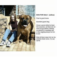 Memes, 🤖, and Dog: DOG FOR SALE Jethro)  Free to good home  Excellent guard dog.  Owner cannot afford to feed  him anymore, as there are no  more drug pushers, thieves,  murderers or molesters left  in the neighbourhood for him  to eat.  Most of them knew him by his  oriental street name, Ho Lee  Schitt Swipe for more randomness!! @x__antisocial_butterfly__x @x__social_butterfly__x @lola_the_ladypug