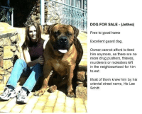 Memes, Free, and Good: DOG FOR SALE Jethro)  Free to good home  Excellent guard dog  Owner cannot afford to feed  him anymore, as there are no  more drug pushers, thieves,  murderers or molesters left  in the neighbourhood for him  to eat.  Most of them knew him by his  oriental street name, Ho Lee  Schitt Dog for sale.