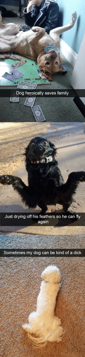 animalsnaps:Dog snaps: Dog heroically saves family   Just drying off his feathers so he can fly   Sometimes my dog can be  kind of a dick animalsnaps:Dog snaps