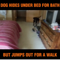 Memes, 🤖, and Bath: DOG HIDES UNDER BED FOR BATH  BUT JUMPS OUT FOR A WALK He knows what he wants! :-D