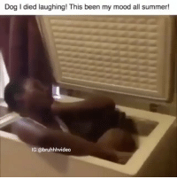Memes, Mood, and Summer: Dog I died laughing! This been my mood all summer!  IG:@bruhhhvideo Double tap fast @ratchethoodvideos
