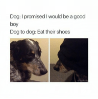 Crush, Drunk, and Memes: Dog: I promised I would be a good  boy  Dog to dog: Eat their shoes  @barkafiy I'm vowing never to get drunk in front of a crush-potential boyfriend and someone needs to hold me to it, I've seen too many people get drunk and fuck things up - not to mention dealing with mistakes whilst being hungover? No thanks