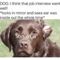 Inside Out, Job Interview, and Memes: DOG: I think that job interview went  well!  *looks in mirror and sees ear was  inside out the whole time*  Son of a @_theblessedone always makes us laugh. Go give him a follow