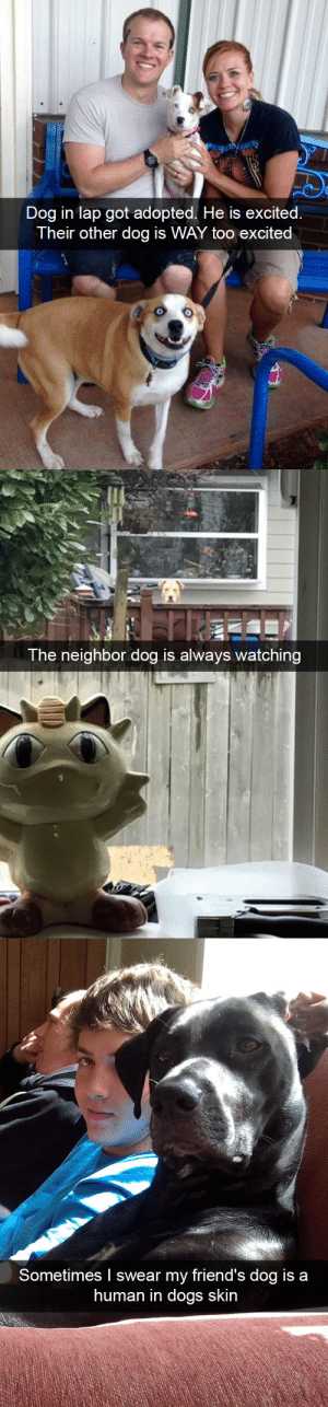 animalsnaps:Animal snaps: Dog in lap got adopted. He is excited.  Their other dog is WAY too excited   The neighbor dog is always watching   Sometimes I swear my friend's dog is a  human in dogs skin animalsnaps:Animal snaps