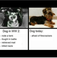 Tips: @anki0231: Dog in WW 2  Dog today:  rode a tank  afraid of firecrackers  fought in battle  retrieved mail  killed nazis Tips: @anki0231