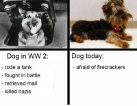 Dank, Mail, and 🤖: Dog in WW 2:  rode a tank  fought in battle  retrieved mail  killed nazis  Dog today:  afraid of firecrackers
