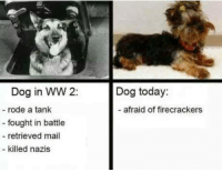 Memes, Mail, and 🤖: Dog in WW 2:  rode a tank  fought in battle  retrieved mail  killed nazis  Dog today:  afraid of firecrackers