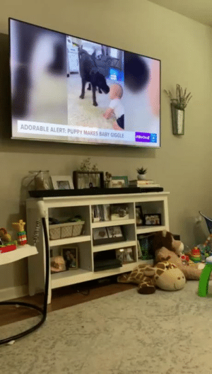 Dog Jumps For Joy When He Recognizes Himself On TV (Source): Dog Jumps For Joy When He Recognizes Himself On TV (Source)