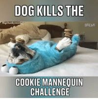 Cookies, Memes, and Mannequin: DOG KILLS THE  Bigchunkymon  BREAK  COOKIE MANNEQUIN  CHALLENGE Oh yeah! Lol! The mannequin challenge champion!👍🏻😀🐶