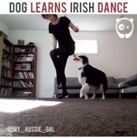Dancing, Irish, and Memes: DOG LEARNS IRISH DANCE Ask yourself this: are you getting the most out of YOUR dog?! :)
