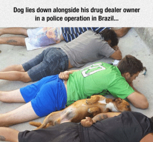 Dogs, Drug Dealer, and Police: Dog lies down alongside his drug dealer owner  in a police operation in Brazil... srsfunny:Dogs Are Always There For You
