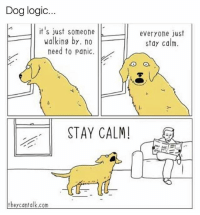 Funny, Logic, and Dog: Dog logic  it's just someone  everyone just  walking by. no  stay calm.  need to panic.  O,  STAY CALM!  they can talk.com 😂😂😂 | More 👉 @miinute