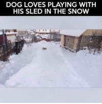 Credit: ViralHog: DOG LOVES PLAYING WITH  HIS SLED IN THE SNOW Credit: ViralHog