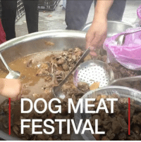 Beef, Dogs, and Food: DOG MEAT  FESTIVAL 23 JUN: A controversial dog meat festival has begun in the Chinese city of Yulin, despite earlier reports saying it had been cancelled or toned down this year. The Lychee and Dog Meat festival takes place annually in Guangxi province. Earlier this year, US campaigners claimed that vendors had been told by authorities not to sell dog meat. But stall-holders told the BBC they had heard nothing about this from officials. On 15 May, city officials confirmed there was no ban. At the heart of the controversy is a change in attitudes towards dogs in China, and accusations of animal cruelty. Residents and vendors say the dogs are killed in a humane way and that eating them is no more or less cruel than consuming pork, beef or chicken. Read more: bbc.in-dogmeatfestival DogMeat Dogs China Traditions DogMeatFestival AnimalRights Festival Yulin Food BBCShorts BBCNews @bbcnews