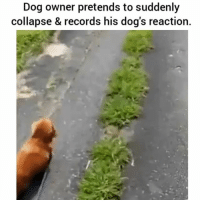 Bahahaha 😂 | follow @fuckersbelike for more: Dog owner pretends to suddenly  collapse & records his dog's reaction. Bahahaha 😂 | follow @fuckersbelike for more