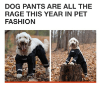 "Fashion, Tumblr, and Blog: DOG PANTS ARE ALL THE  RAGE THIS YEAR IN PET  FASHION <p><a class=""tumblr_blog"" href=""http://pikatruuu.tumblr.com/post/136539972528"">pikatruuu</a>:</p> <blockquote> <p>I don't believe this</p> </blockquote>"