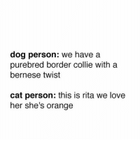 Memes, Border Collie, and Orange: dog person: we have a  purebred border collie with a  bernese twist  cat person: this is rita we love  her she's orange tag a cat person (@doctor_nora_)