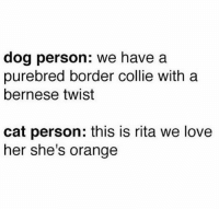 Love, Border Collie, and Orange: dog person: we have a  purebred border collie with a  bernese twist  cat person: this is rita we love  her she's orange