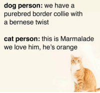 Love, Border Collie, and Orange: dog person: we have a  purebred border collie with  a bernese twist  cat person: this is Marmalade  we love him, he's orange Love it!
