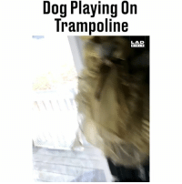 "Memes, Bible, and Trampoline: Dog Playing 0n  Trampoline  LAD  BIBLE ""I woke up this morning to find a dog enjoying itself on my trampoline"" 😁😂 (TW-PendleburyErik)"