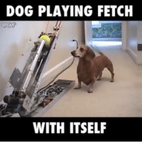 The future is here! 🐶🎾: DOG PLAYING FETCH  BREAK  WITH ITSELF The future is here! 🐶🎾