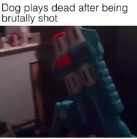 A Very Good Boy trapvine repost: Dog plays dead after being  brutally shot A Very Good Boy trapvine repost