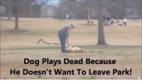 Dog refuses to leave doggy park....Plays dead LoL ❤️ Love Me Love My Dog️❤️ Join our awesome group for dog lovers ❤ 💚 Join now ➡ www.facebook.com/groups/1413106548993764: Dog Plays Dead Because  He Doesn't Want To Leave Park! Dog refuses to leave doggy park....Plays dead LoL ❤️ Love Me Love My Dog️❤️ Join our awesome group for dog lovers ❤ 💚 Join now ➡ www.facebook.com/groups/1413106548993764