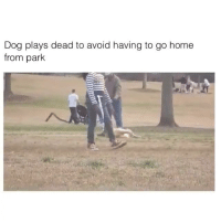 Dogs! lol: Dog plays dead to avoid having to go home  from park Dogs! lol