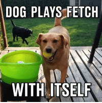 This dog is so happy 🐶🎾: DOG PLAYS FETCH  WITH ITSELF This dog is so happy 🐶🎾