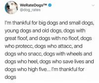 Dogs, Memes, and Leggings: @dog_rates  I'm thankful for big dogs and small dogs,  young dogs and old dogs, dogs with  great floof, and dogs with no floof, dogs  who protecc, dogs who attacc, and  dogs who snacc, dogs with wheels and  dogs who heel, dogs who save lives and  dogs who high five...I'm thankful for  dogs Thankful for leggings and fuzzy socks