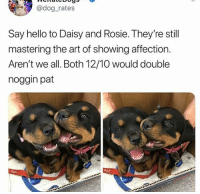 Hello, Rosie, and Art: @dog rates  Say hello to Daisy and Rosie. They're still  mastering the art of showing affection.  Aren't we all. Both 12/10 would double  noggin pat