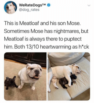 Memes, Meatloaf, and 🤖: @dog_rates  This is Meatloaf and his son Mose.  Sometimes Mose has nightmares, but  Meatloaf is always there to puptect  him. Both 13/10 heartwarming as h*ck