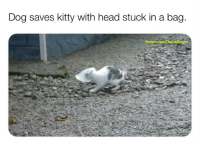 Head, Memes, and youtube.com: Dog saves kitty with head stuck in a bag.  You Someone need to let me know who the cameraman is so we can talk I JUST WANNA TALK 😤😩😂 (📹: YouTube u-TheCatsEmpire)